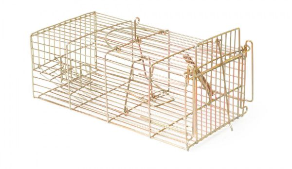 Picture of Racan Rat Trap - Humane