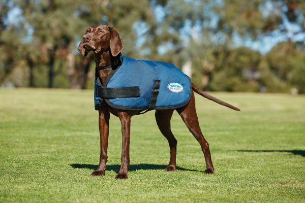 Picture of Weatherbeeta Comfitec Classic Dog Coat Dark Blue