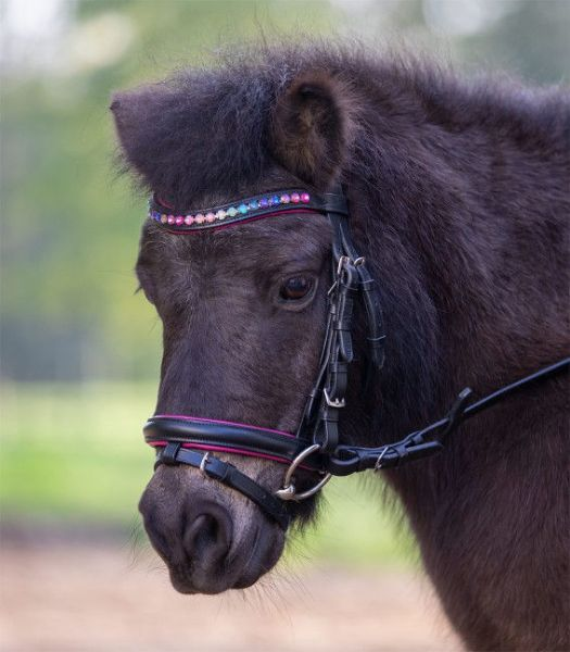 Picture of Waldhausen Star Bridle Pinky