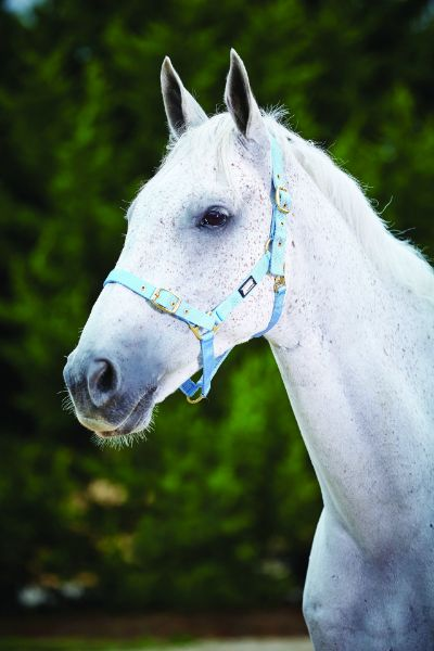 Picture of Roma Adjustable Quick Clip Headcollar Light Blue
