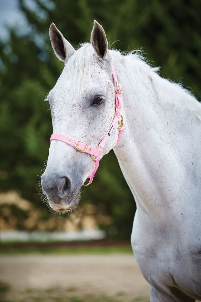Picture of Roma Adjustable Quick Clip Headcollar Pink