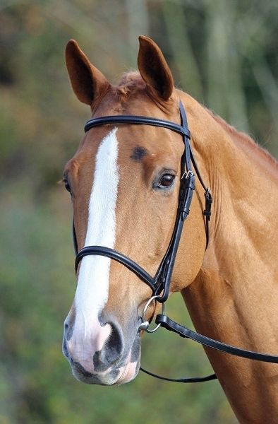 Picture of Aviemore Raised Cavesson Bridle Black
