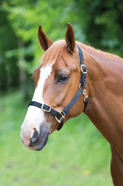 Picture of Shires Adjustable Headcollar Black