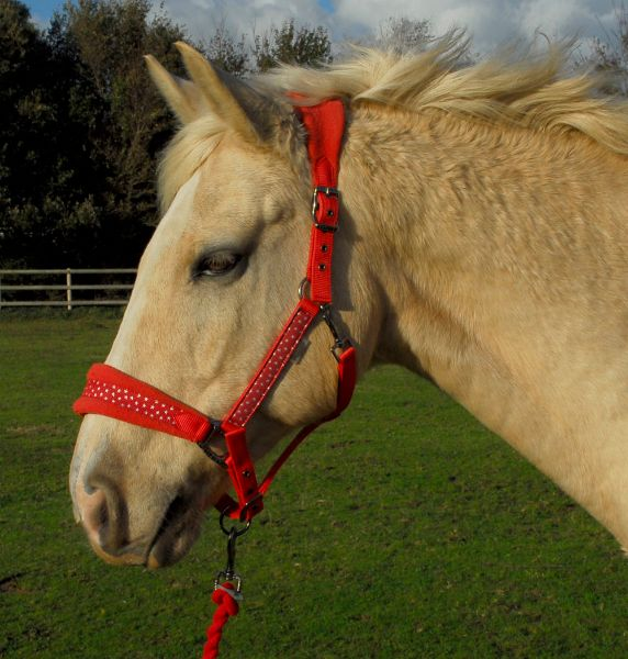Picture of Rhinegold Star Spangled Headcollar & Rope Red
