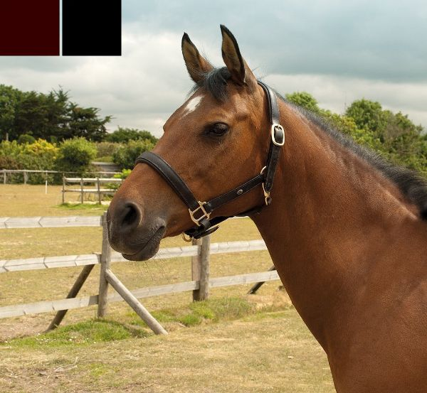 Picture of Heritage Padded Leather Headcollar