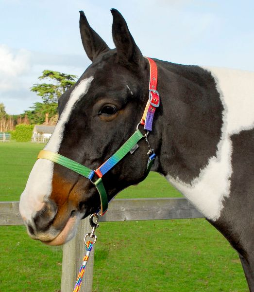 Picture of Rhinegold Rainbow Headcollar And Rope