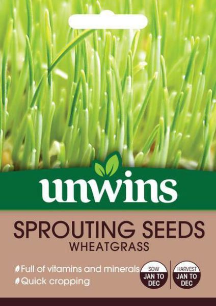Picture of Unwins Sprouting Seeds Wheatgrass Seeds