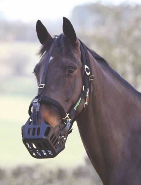 Picture of Greenguard Head collar Black